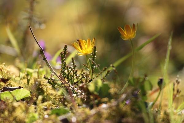 Glenelg Flowers